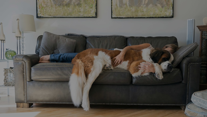 dog-sleep-home_mortgage_header.jpg