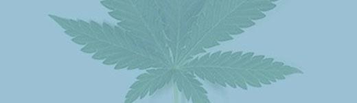 cannabis-paysage